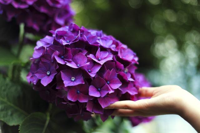 bloom-1853360_1920